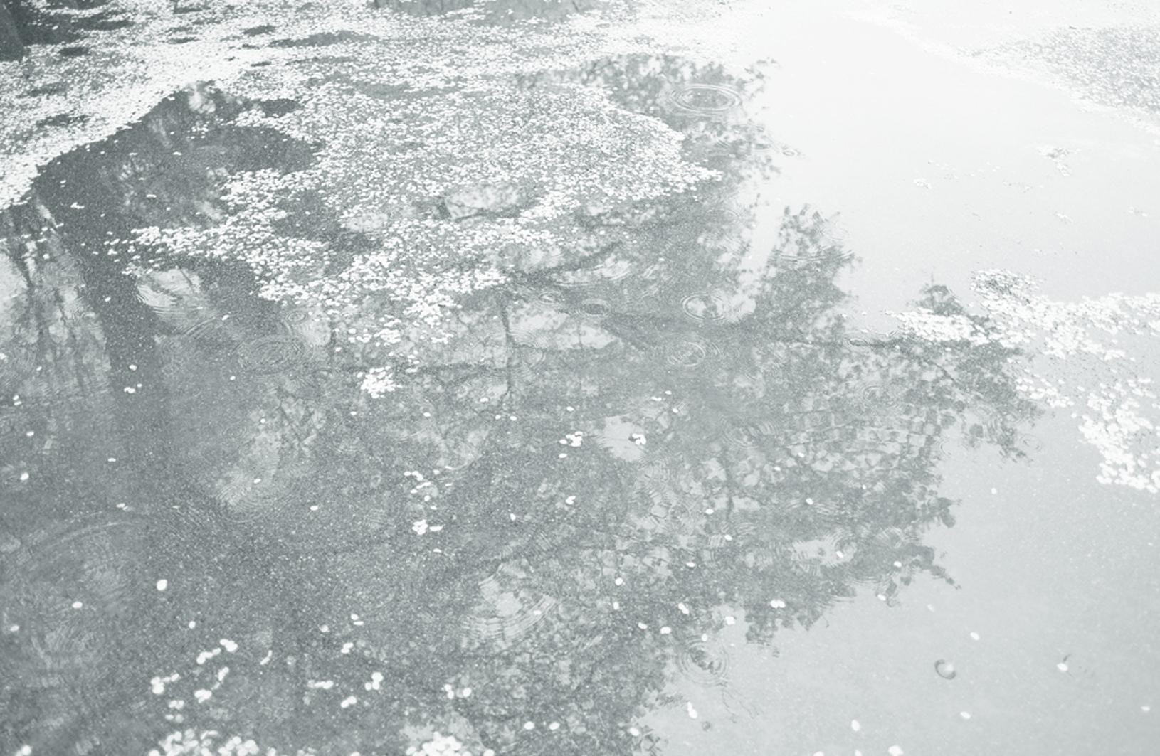 photo-hanakoganei99p